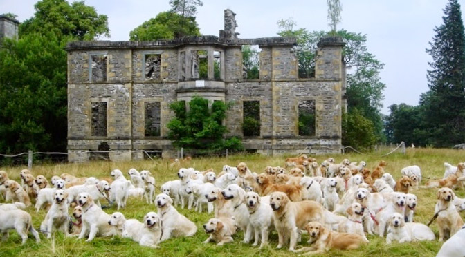 Guisachan Estate House and Retrievers